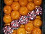 Mandarines Morket - фото 2