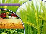 Fabricant et fournisseur de pesticides dans le monde - фото 1