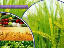 Fabricant et fournisseur de pesticides dans le monde