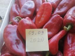 Kapia pepper