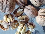 Орехи - walnuts inshell, kernel - фото 3